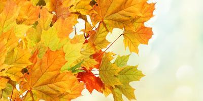 automne-400